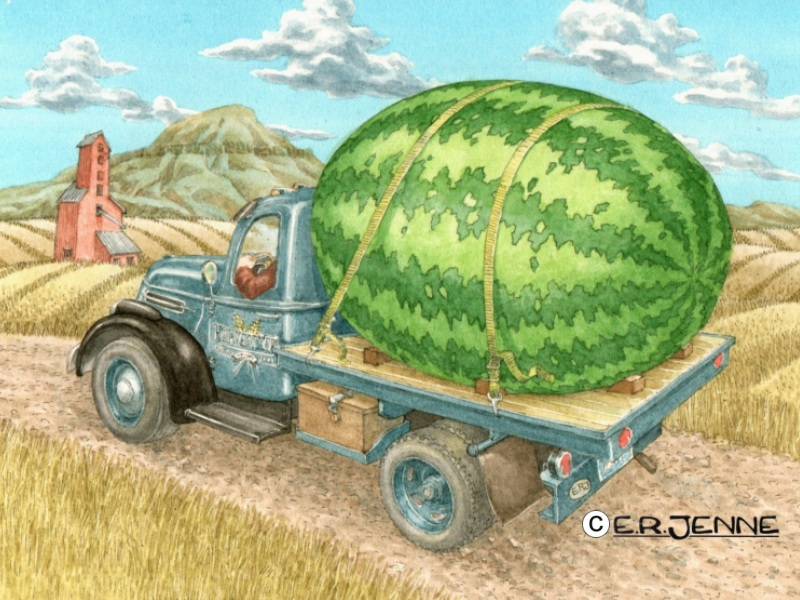 An illustration for the 'Wuttamelon' beer label and packaging.  'Wuttamelon is a seasonal beer produced by the Harvest Moon brewery in Belt, Montana.